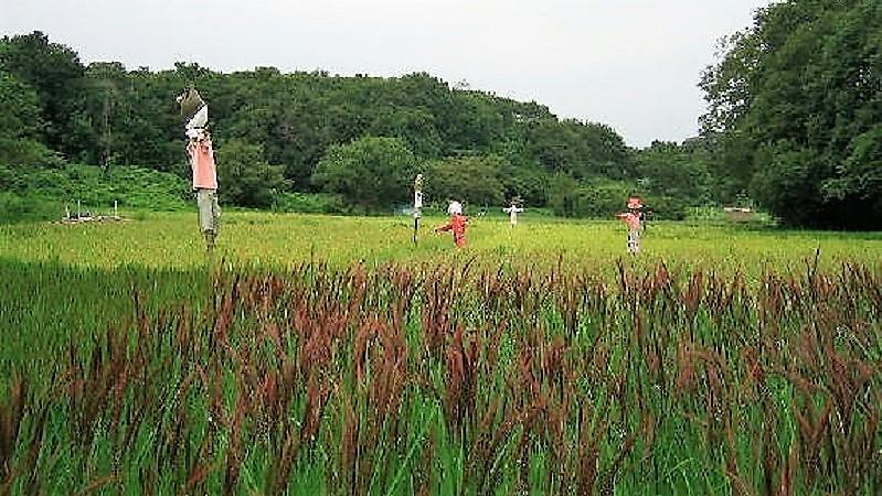 《宍塚の里》17 専門家に教わり 自然農田んぼ塾