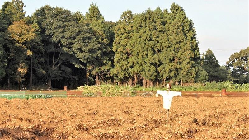 《邑から日本を見る》24 このごろの農村風景
