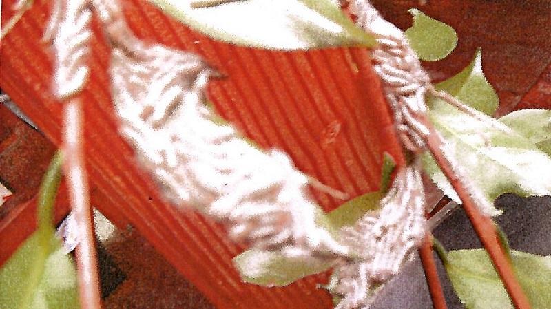 《くずかごの唄》44 痛い 痒い 虫さされの人体実験