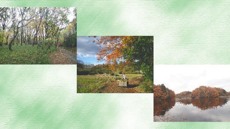 《宍塚の里山》52 里山は秋から冬へ模様替え