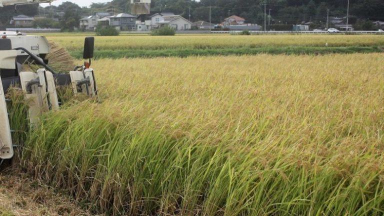 県産米ナンバー1を決定へ コンテスト出品米を募集