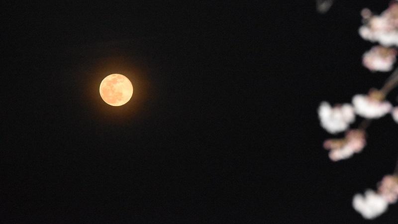 満開の桜川河口で満月を見下ろす 《土着通信部》45